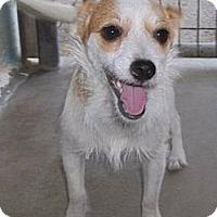 Adopt A Pet :: Piper - Lockhart, TX