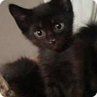 Adopt A Pet :: Marley - Edmonton, AB