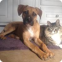 Adopt A Pet :: *Raegan - PENDING - Westport, CT