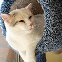 Adopt A Pet :: Maggie - Prescott, AZ