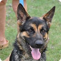 Adopt A Pet :: Jordan - Dripping Springs, TX
