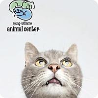 Adopt A Pet :: Monty - Knoxville, TN