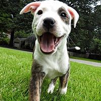 Adopt A Pet :: MAGNOLIA - Knoxville, TN