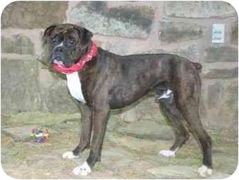Boxer Dog for adoption in Muldrow, Oklahoma - Donavan