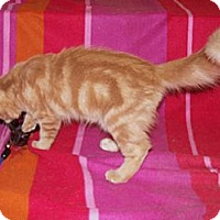 Adopt A Pet :: Hawk - Scottsdale, AZ