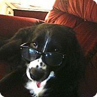Adopt A Pet :: Blossom - Gilbert, AZ