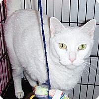 Adopt A Pet :: Precious - Chandler, AZ