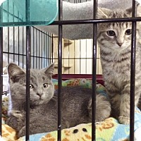 Adopt A Pet :: Misty - Byron Center, MI