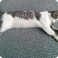 Adopt A Pet :: Darling - Chicago, IL