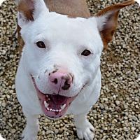 Adopt A Pet :: Valentine - Meridian, ID