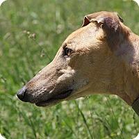 Adopt A Pet :: Winner - Portland, OR