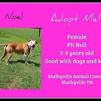 Adopt A Pet :: Noel - Covington, TN