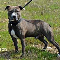 Adopt A Pet :: Branson - Yreka, CA