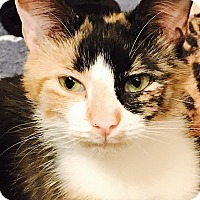 Adopt A Pet :: Maria - St. Louis, MO