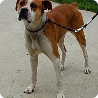 Adopt A Pet :: BeBe - Staley, NC