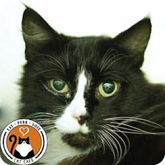 Domestic Mediumhair Cat for adoption in Hilliard, Ohio - Winnie