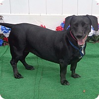 Adopt A Pet :: DAHLIA - Marietta, GA