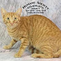 Adopt A Pet :: Ziggy / Lemons - Greeneville, TN