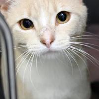 Adopt A Pet :: Jet - Lafayette, IN