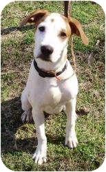 Pointer Mix Dog for adoption in Overland Park, Kansas - JETHRO