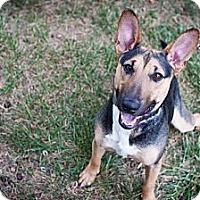 Adopt A Pet :: Walter - Clarksburg, MD