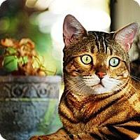 Adopt A Pet :: Hunter - Lantana, FL