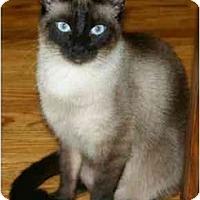 Adopt A Pet :: Little Boy - Etobicoke, ON