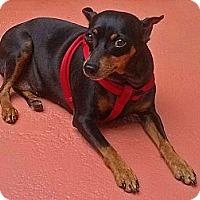 Adopt A Pet :: Molly - North Palm Beach, FL