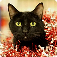 Adopt A Pet :: Kitty Chanel - Sacramento, CA