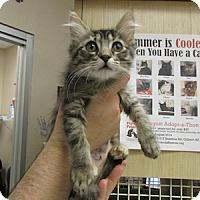 Adopt A Pet :: Livonia Winkles - Gilbert, AZ