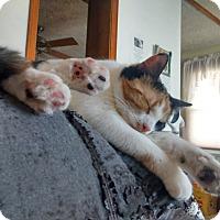 Adopt A Pet :: Kissy - Saint Albans, WV
