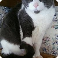 Adopt A Pet :: Dash (no adoption fee) - Witter, AR