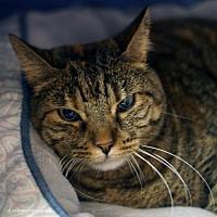 Adopt A Pet :: Asti - Tucson, AZ