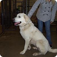 Adopt A Pet :: GRACIE - Medford, WI
