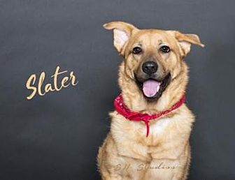 Golden Retriever/Chow Chow Mix Dog for adoption in Houston, Texas - Slater