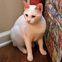 Adopt A Pet :: Bacon - Huntsville, AL