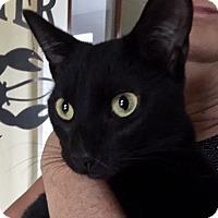 Adopt A Pet :: Spike Lee - Beaufort, SC