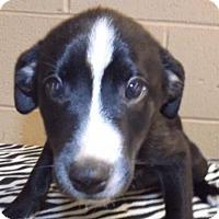 Adopt A Pet :: Molly - Oxford, MS