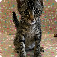 Adopt A Pet :: Lilo - Los Angeles, CA