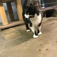 Adopt A Pet :: Betsy - BATH, NY