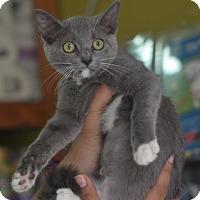Adopt A Pet :: Mirage - Brooklyn, NY