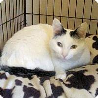 Adopt A Pet :: Chloe - Rutherfordton, NC
