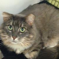 Adopt A Pet :: Barry - Alexandria, VA