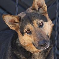 Adopt A Pet :: Sandy von Sassnitz - Los Angeles, CA