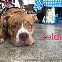 Adopt A Pet :: Zelda - Los Angeles, CA