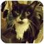 Photo 3 - Domestic Shorthair Cat for adoption in Medford, Massachusetts - Marley