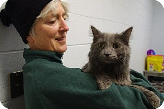 Domestic Longhair Cat for adoption in Elyria, Ohio - Mulligan