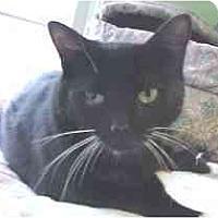 Adopt A Pet :: Ruth - Lunenburg, MA