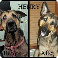 Adopt A Pet :: Henry - Green Cove Springs, FL