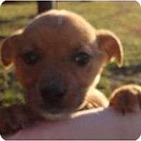Adopt A Pet :: Sprinkle - Plainfield, CT